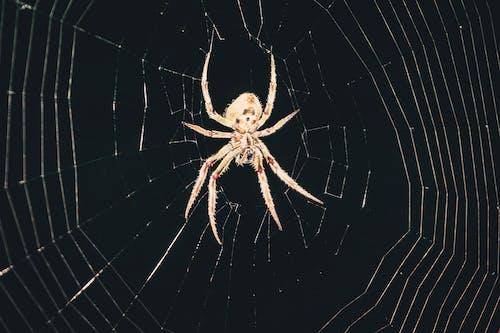 Fotobanka sbezplatnými fotkami na tému pavučiny, pavúk