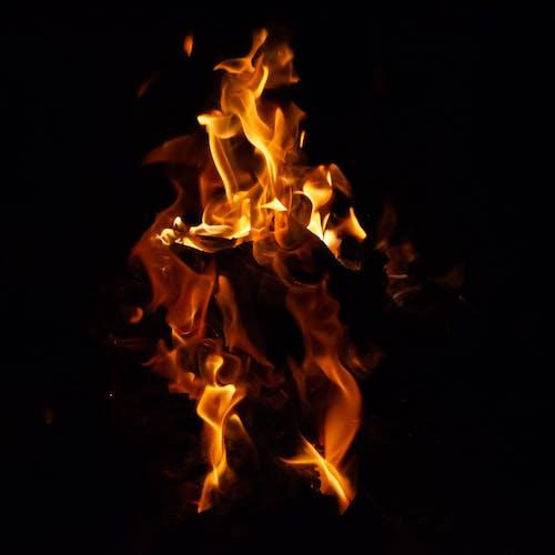 Fotos de stock gratuitas de fénix, fuego, hoguera, llama