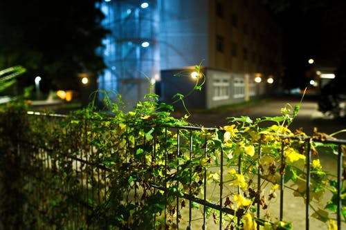 Free stock photo of blue, fence, light, night