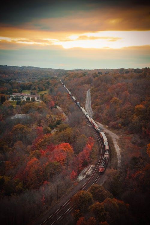 Foto d'estoc gratuïta de altura, caure, colors de tardor, fulles de tardor