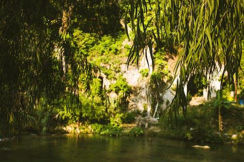Immagine gratuita di acqua, alberi, ambiente, crescita