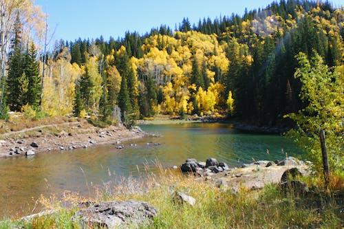 湖, 白楊, 秋季 的 免費圖庫相片