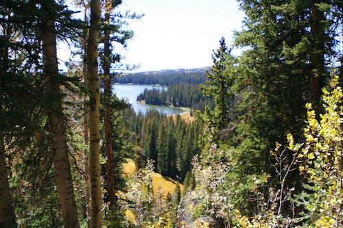 湖 的 免費圖庫相片