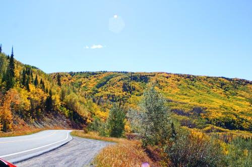 白楊, 秋季 的 免費圖庫相片