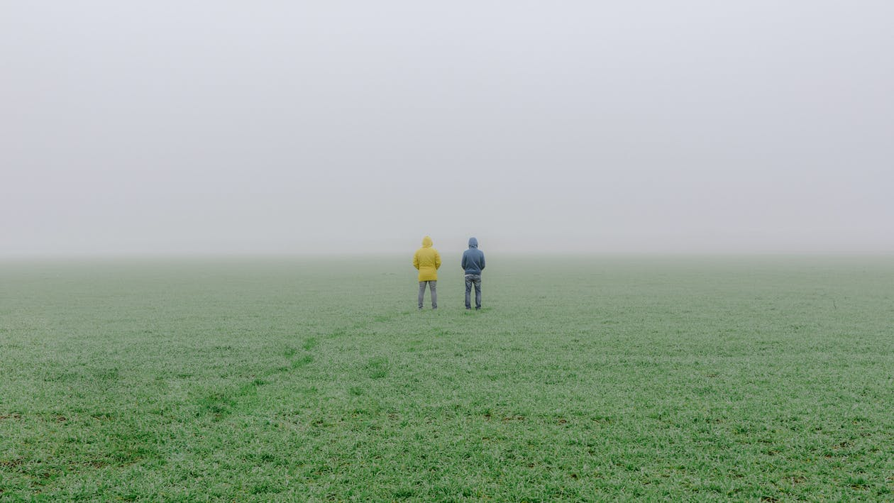campo, coperto, erba