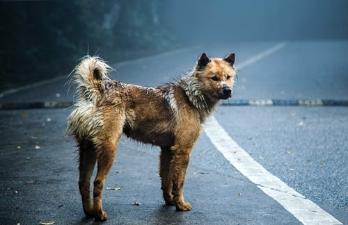 Darmowe zdjęcie z galerii z pies, psi, ssak, szczeniak