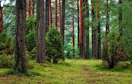 Pictured above is a forest landscape.