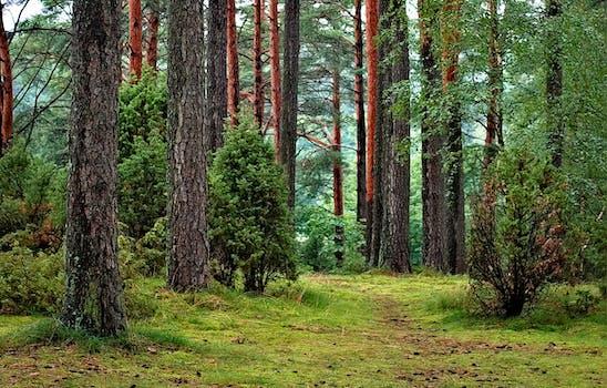wood, dawn, landscape, nature