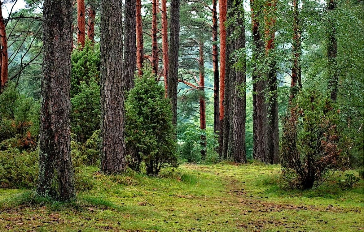 Kayu Hutan