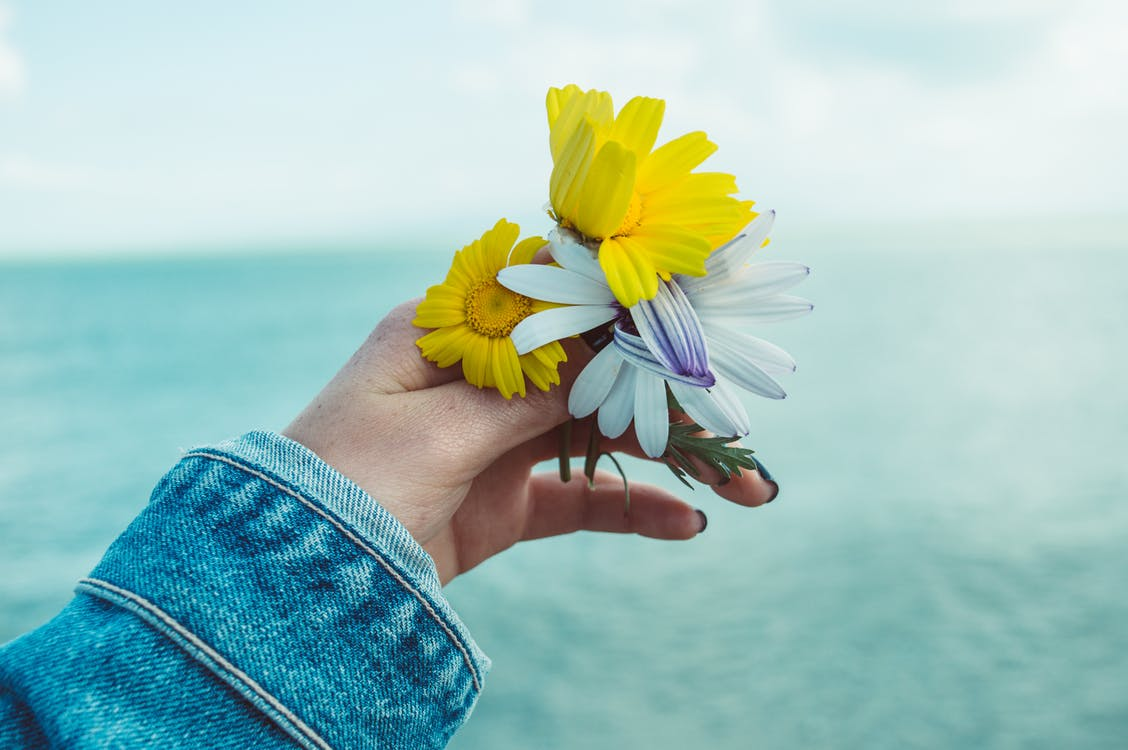 Photo of Person's Hand Holding Flowers