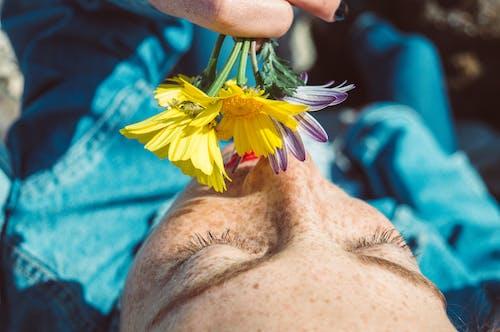 Kostenloses Stock Foto zu aroma, augenbrauen, blumen, blütenblätter