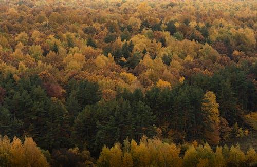Photos gratuites de arbres, automne, couleurs de l'automne, environnement