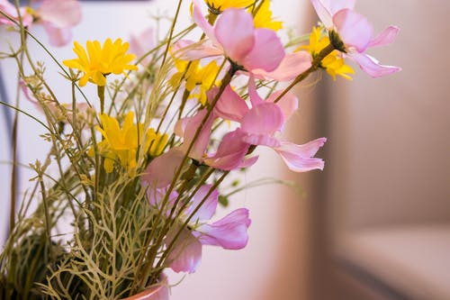 Free stock photo of apartment, artificial flowers, flowers
