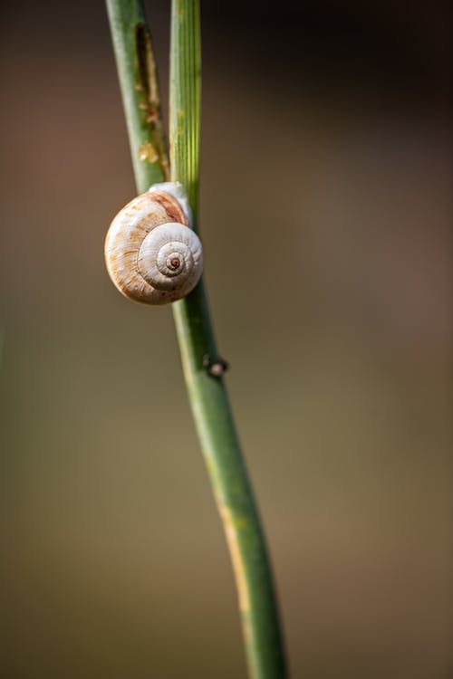Grey Snail on Green Plant