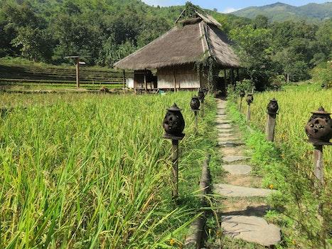 Free stock photo of highlands, housing, accommodation, laos
