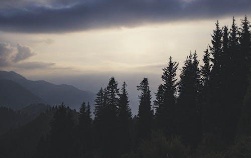 คลังภาพถ่ายฟรี ของ ดวงอาทิตย์, ต้นไม้, ท้องฟ้า, ป่า