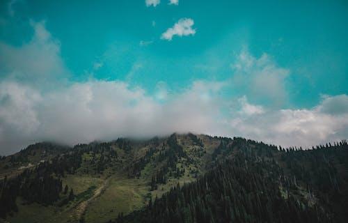 คลังภาพถ่ายฟรี ของ ควัน, ดวงอาทิตย์, ต้นไม้, ท้องฟ้า