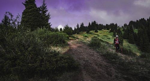 Foto profissional grátis de árvores, céu, grama, homem