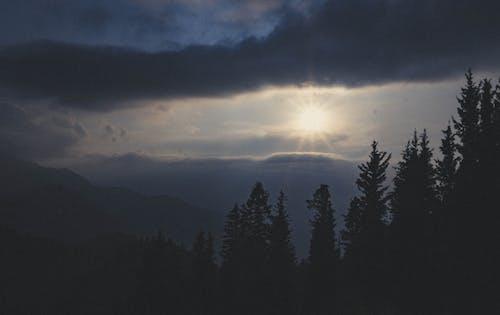 Foto profissional grátis de árvores, céu, madeiras, sol