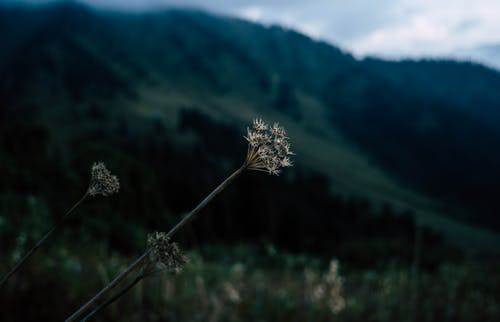 Foto profissional grátis de árvores, grama, macro, montanhas