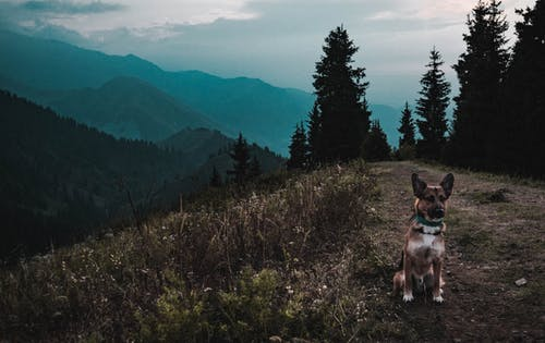 Foto profissional grátis de árvores, cachorro, grama, gsd