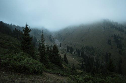 Foto profissional grátis de árvores, azul, estado de espírito, fumaça
