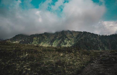 Foto profissional grátis de árvores, céu, fumaça, madeiras