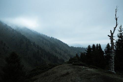 คลังภาพถ่ายฟรี ของ ควัน, ต้นไม้, ภูเขา, อารมณ์