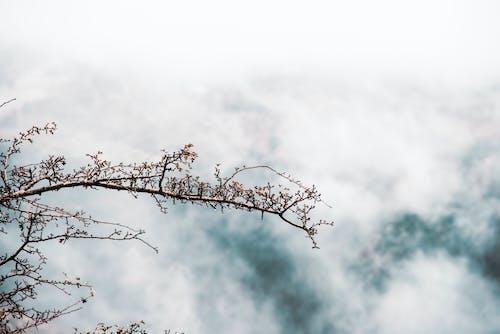 Ingyenes stockfotó esőcseppek, gyár, hó hegyek, köd témában
