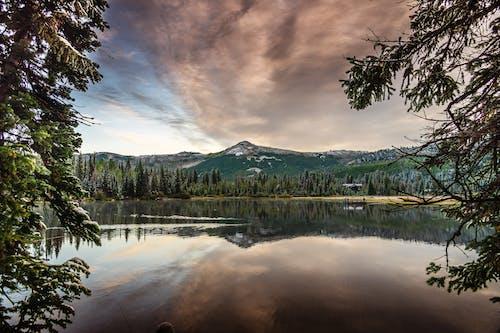 Бесплатное стоковое фото с вода, водоем, гора, деревья
