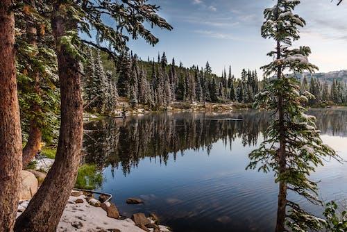 Pine Trees Near Body of Water