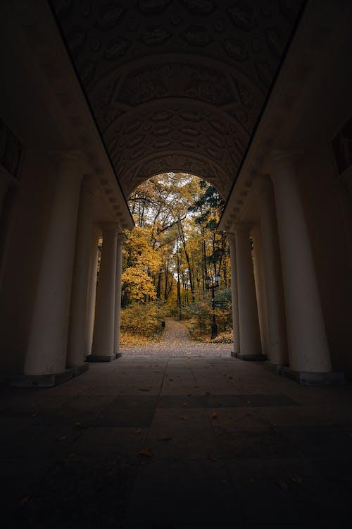 Photos gratuites de architecture, feuilles jaunes, forêt automne, grand angle