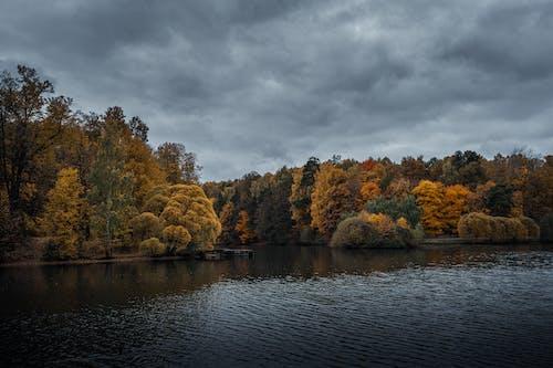 Kostenloses Stock Foto zu bäume, bedeckt, bewölkt, farben des herbstes
