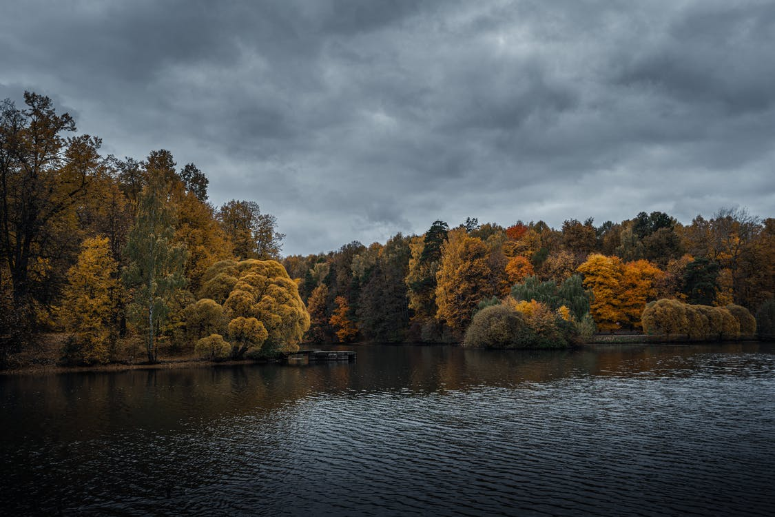 Photo of Forest Near Lake Under Cloudy Sky