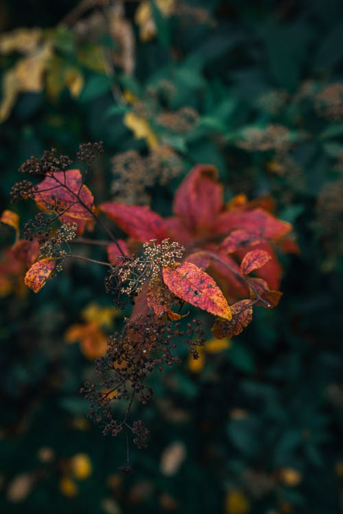 Kostenloses Stock Foto zu blätter, blume, farbe, farben des herbstes