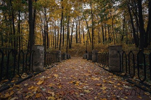 Photos gratuites de beauté dans la nature, feuilles d'automne, forêt, grand angle