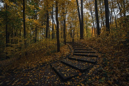 Fallen Leaves on Stairs on Forest
