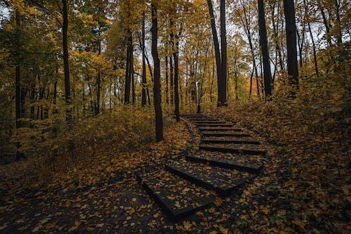 Gratis lagerfoto af blade, efterår, efterårsblade, efterårsfarver