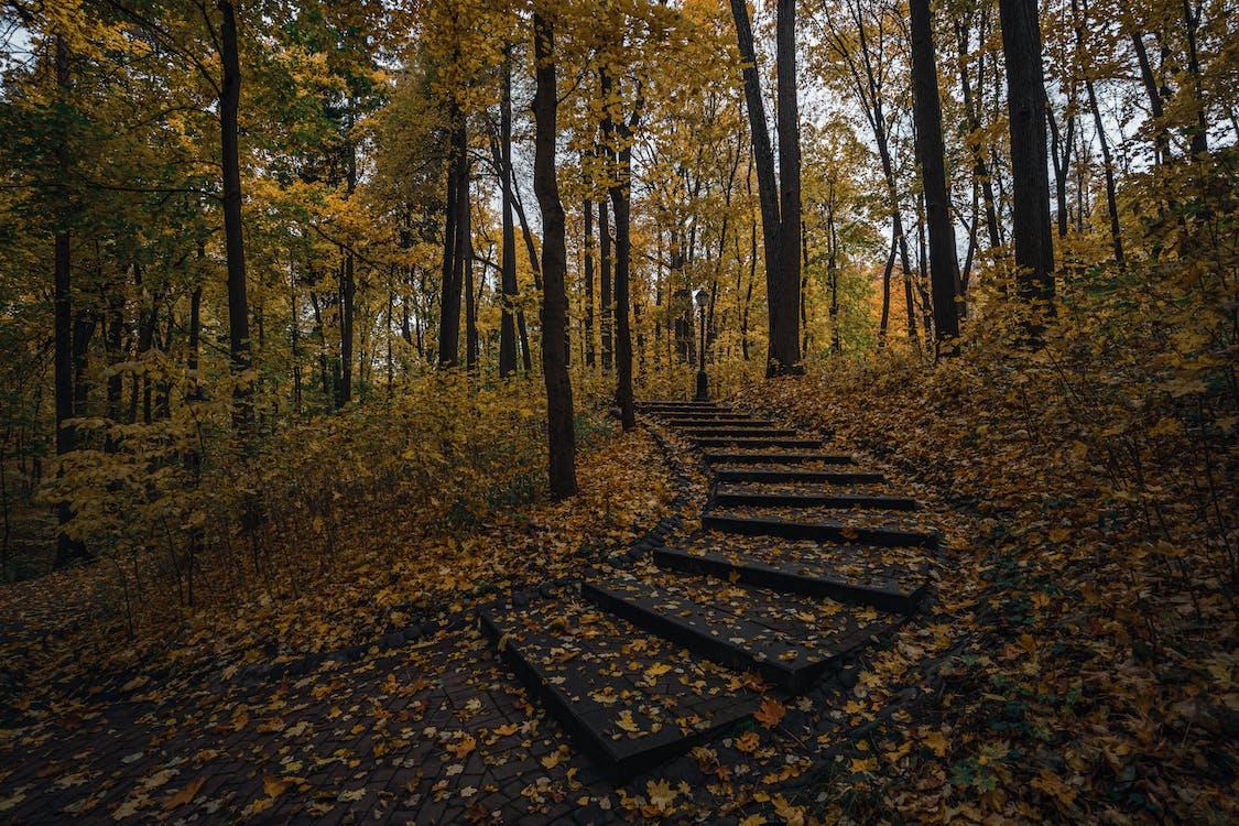 chodnik, drzewa, jesień