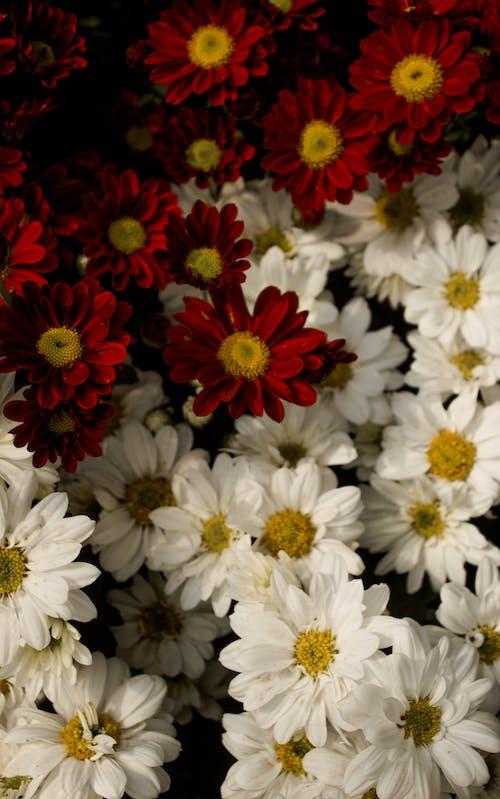 Foto profissional grátis de de flores, flor, natureza, papel de parede