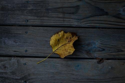 Immagine gratuita di autunno, cadere, colori autunnali, foglia