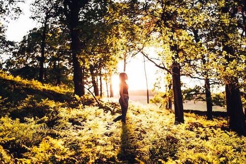 Ảnh lưu trữ miễn phí về ánh sáng ban ngày, ánh sáng mặt trời, buổi chụp ảnh, cây