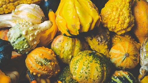 Ingyenes stockfotó friss zöldség, Halloween-tök, tök témában