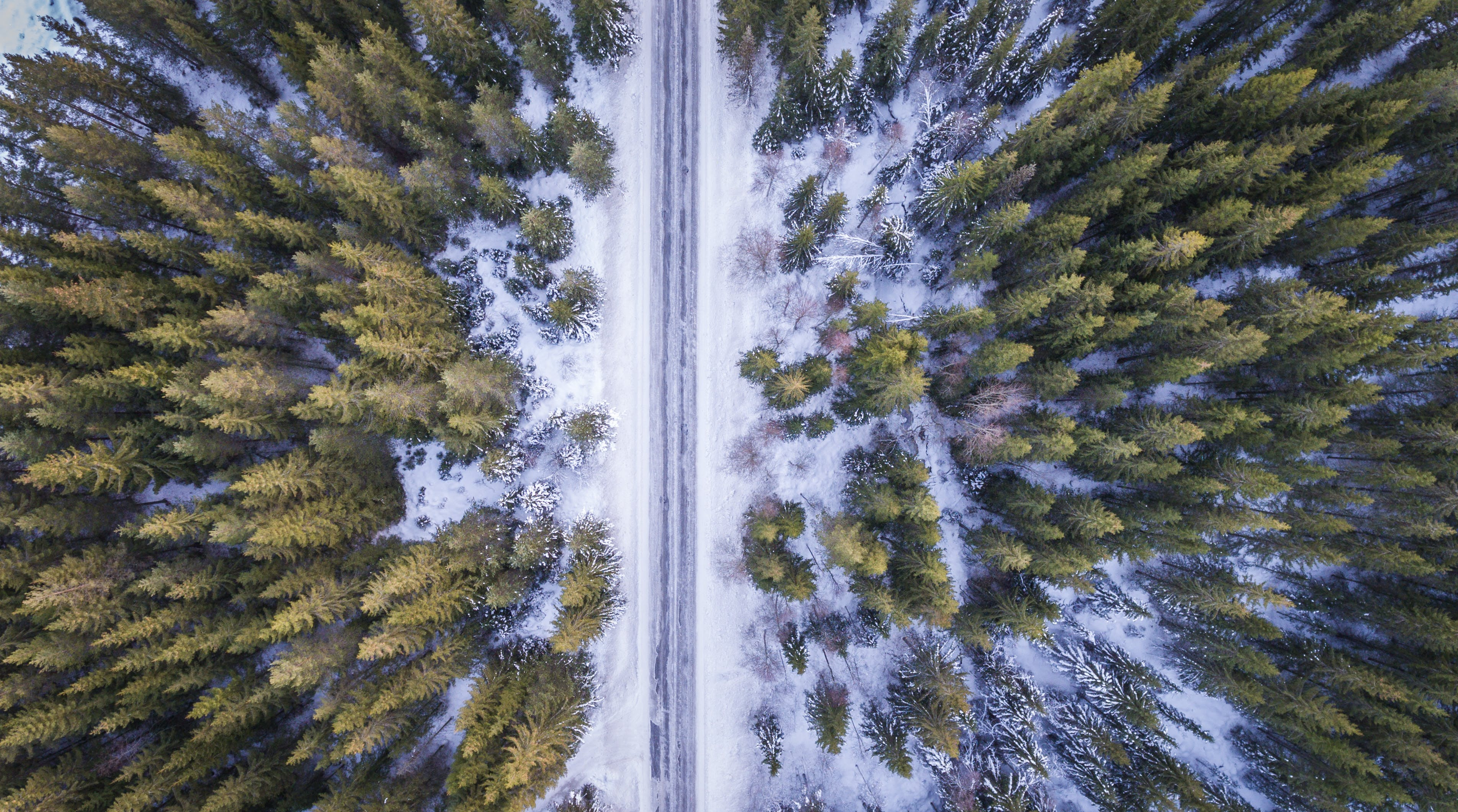 High Angle View of Trees Against Sky