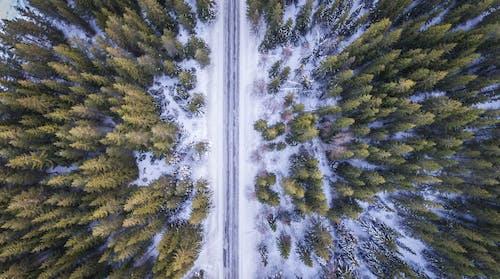 Immagine gratuita di aereo, alberi, ambiente, congelato