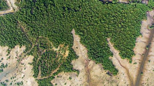 Kostnadsfri bild av drönarbilder, drönarfotografering, fågelperspektiv, fält
