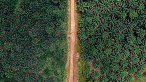 Aerial Photography of Road Near Green Trees