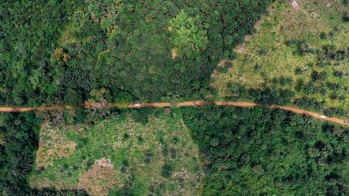 Darmowe zdjęcie z galerii z droga, drzewa, fotografia lotnicza, fotografia z drona