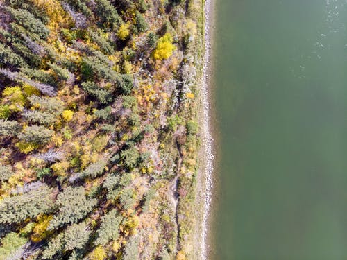 Free stock photo of aerial photography, drone photography, drone shot, forest