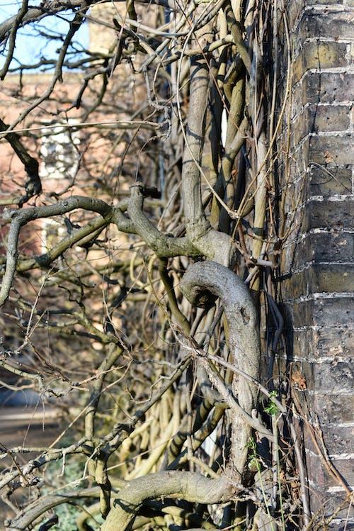 Free stock photo of tangled, tree